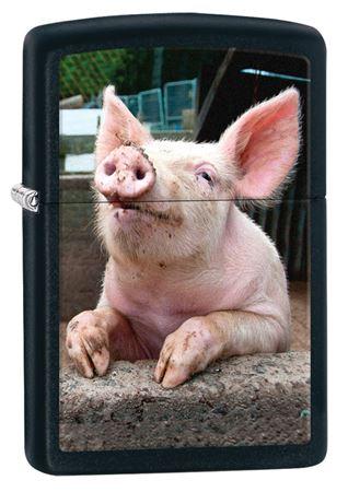 Pig Dreaming